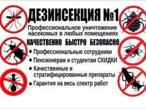 аудит кампании яндекс директ уничтожение насекомых и грызунов
